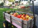 wagon donation to food pantry 2013
