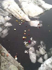 Lily, rose, and daffodil float in the frozen Squamscott River on the vernal equinox 2014. Welcome Spring!!